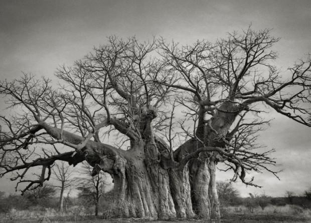 Bu 20 ağacı fotoğraflamak için tam 14 yıl harcadı - Page 3