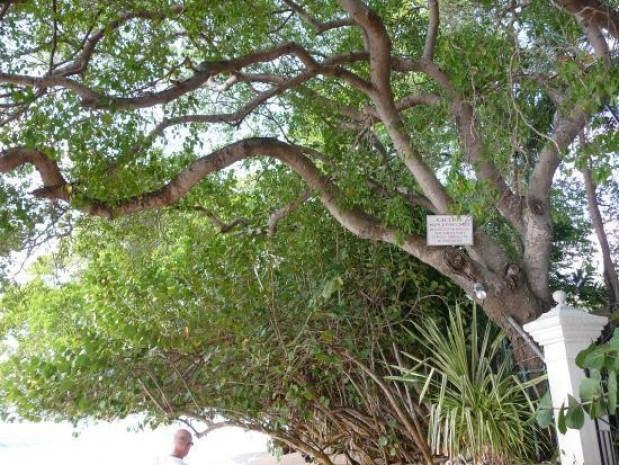 Bu ağaca sakın yaklaşmayın! - Page 3