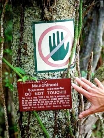 Bu ağaca sakın yaklaşmayın! - Page 4