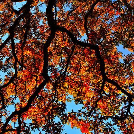 Bu ağaç resimleri iPhone ile çekildi! - Page 2