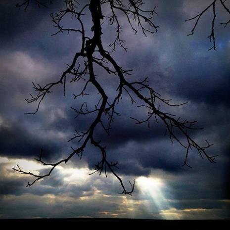 Bu ağaç resimleri iPhone ile çekildi! - Page 4