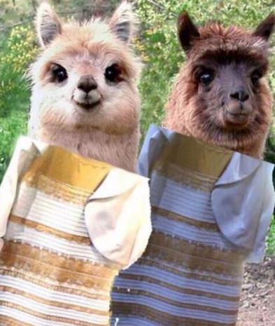 """Bu elbise ne renk?"" capsleri - Page 4"