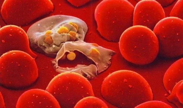 Bu görüntüler bağışıklık sisteminize ait! - Page 2
