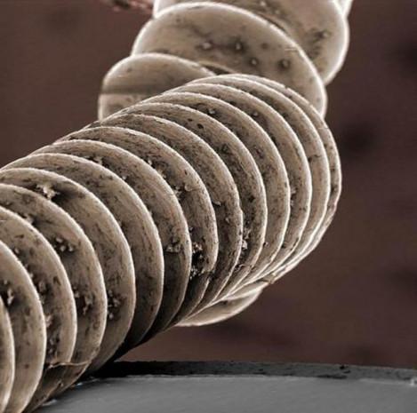 Bu güne kadar mikroskopla çekilen en iyi fotoğraflar - Page 2