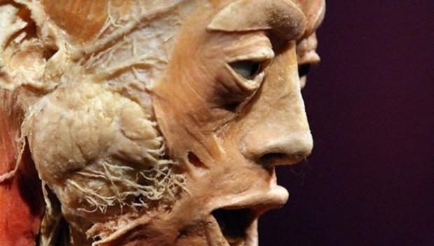 Bu heykeller gerçek insan dokusundan! - Page 3