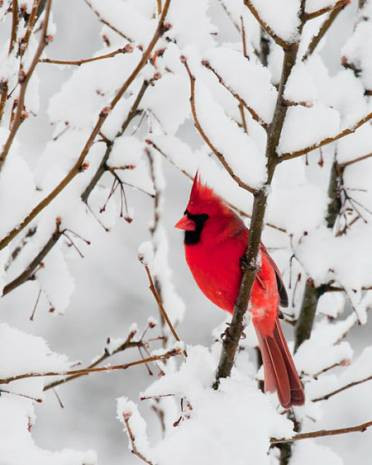 Bu kar fotoğraflarına hayran kalacaksınız! - Page 2