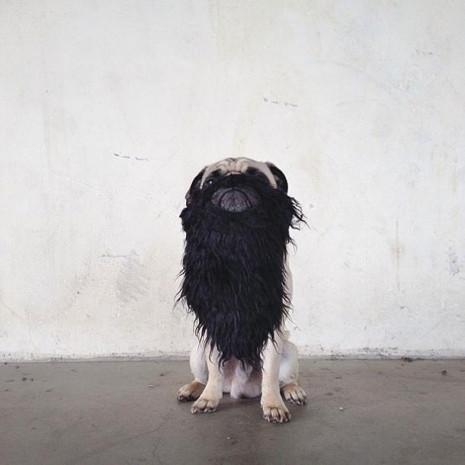Bu köpeğin İnstagram'da bakın kaç takipçisi var - Page 4