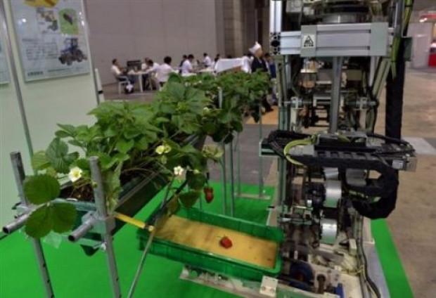 Bu robot meyve topluyor - Page 1