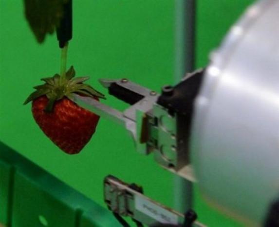 Bu robot meyve topluyor - Page 2