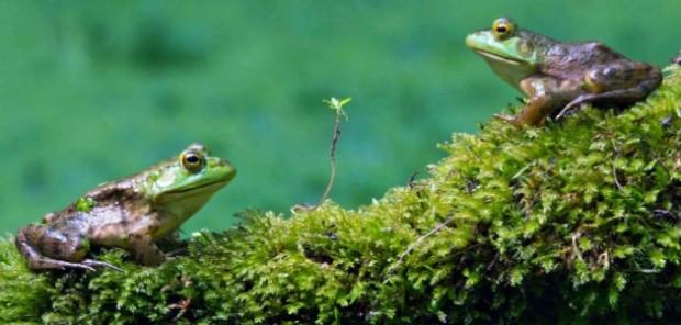 Bu yılın en iyi doğa fotoğrafları seçildi! - Page 1