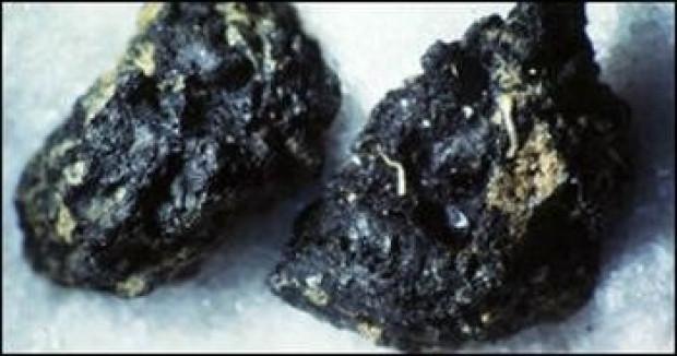 Bugüne kadar keşfedilmiş bilinen en eski 7 gıda - Page 3
