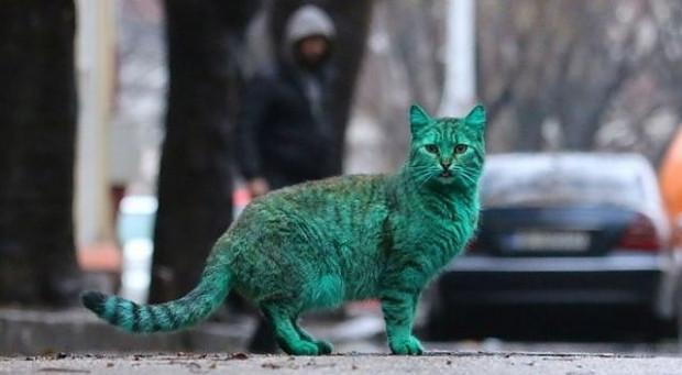 Bulgaristan sokaklarındaki esrarengiz yeşil kedinin 7 şaşırtıcı fotoğrafı - Page 2