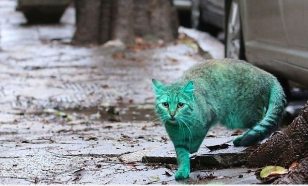 Bulgaristan sokaklarındaki esrarengiz yeşil kedinin 7 şaşırtıcı fotoğrafı - Page 3