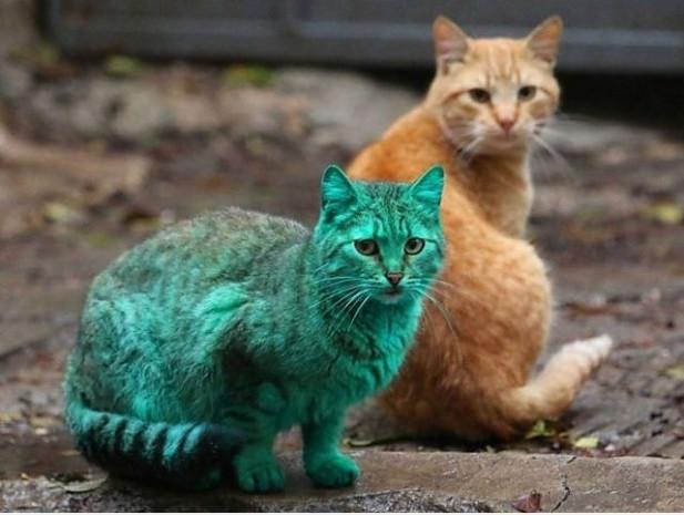 Bulgaristan sokaklarındaki esrarengiz yeşil kedinin 7 şaşırtıcı fotoğrafı - Page 4
