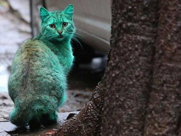 Bulgaristan sokaklarındaki esrarengiz yeşil kedinin 7 şaşırtıcı fotoğrafı - Page 1