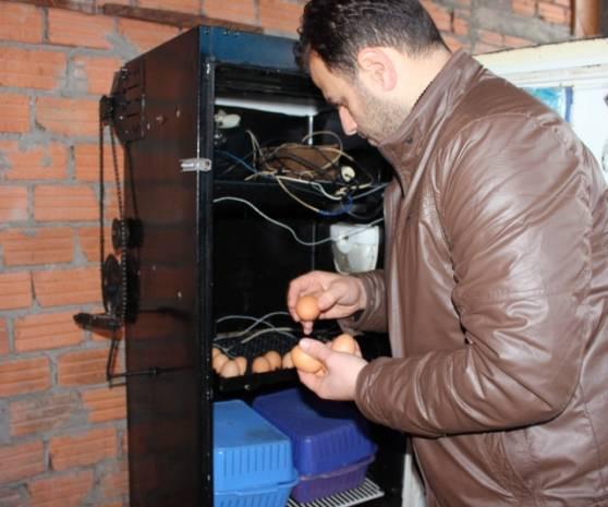 Buzdolabını kuluçka makinesi yaptı - Page 2