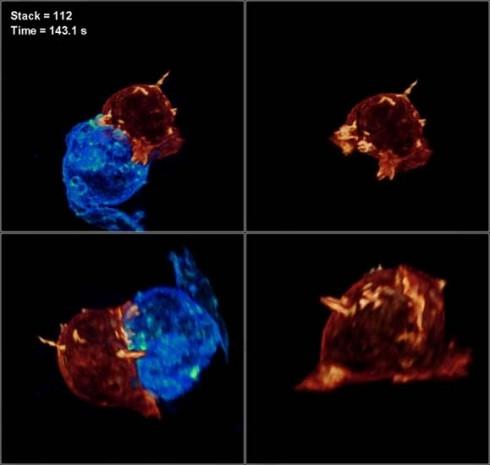 Canlı bir hücre ilk kez görüntülendi - Page 2