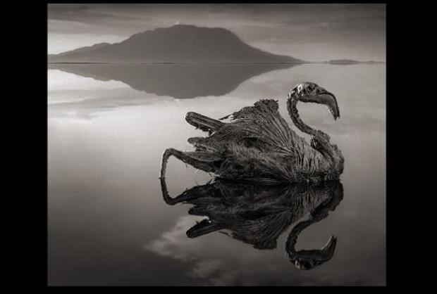 Canlıları mumyaya çeviren göl - Page 1