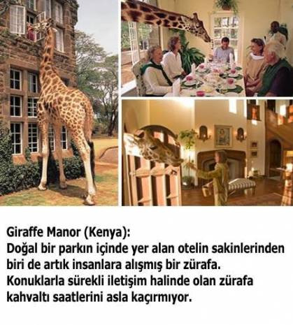 Çılgın mimarlardan akla zarar oteller! - Page 3