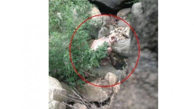 Çin canavarının foyası ortaya çıktı! - Page 2