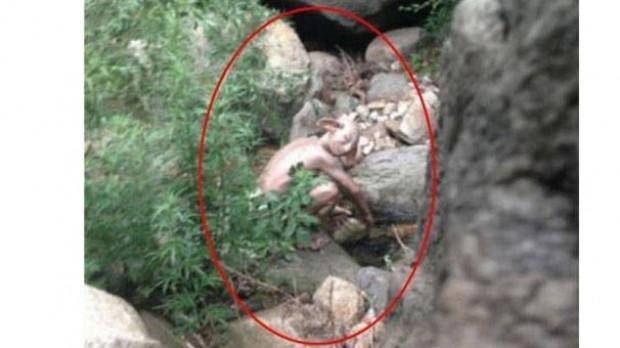 Çin canavarının foyası ortaya çıktı! - Page 3