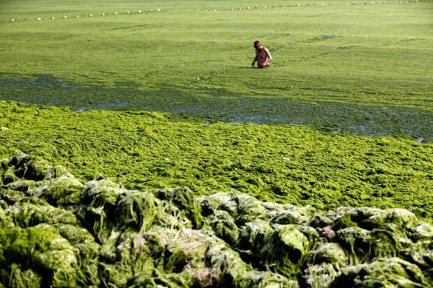 Çin'de deniz yosun kustu! - Page 1