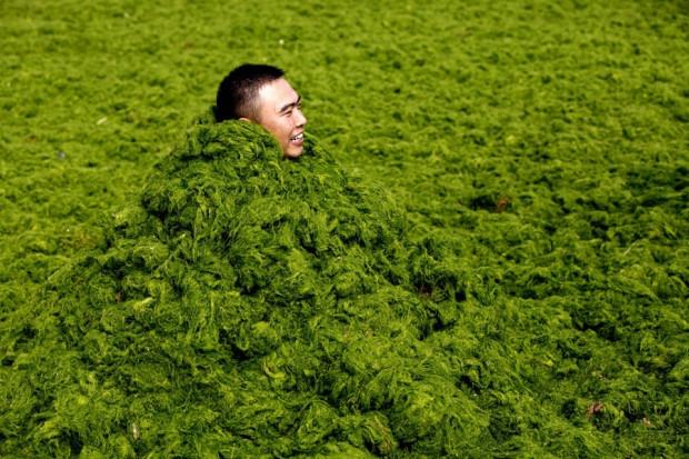 Çin'de deniz yosun kustu! - Page 2