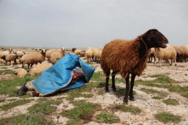 Çobanlardan telefon şarjında ilginç çözüm! - Page 1