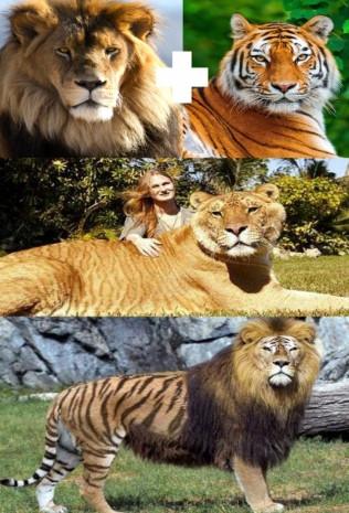 Çok şaşırtıcı 10 melez hayvan - Page 3