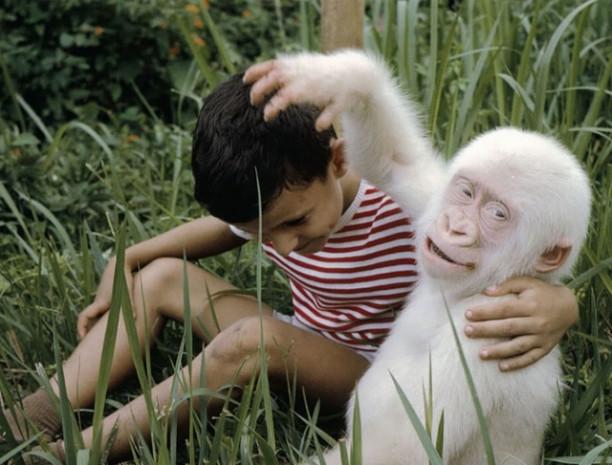 Çok şaşırtıcı Albino hayvanlar - Page 4