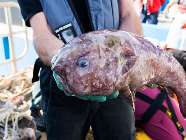 Daha isimleri bile olmayan yeni deniz canlıları! - Page 1