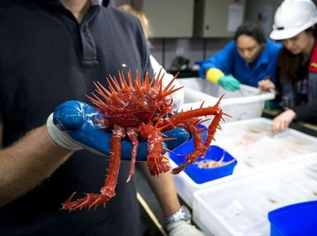 Daha isimleri bile olmayan yeni deniz canlıları! - Page 4