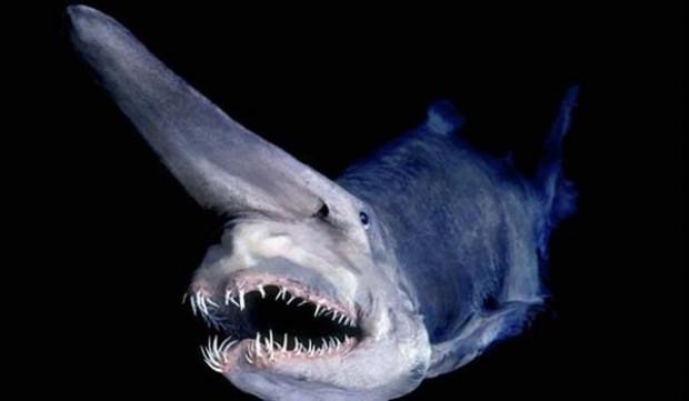 Daha önce bu köpekbalıklarını görmediniz - Page 1