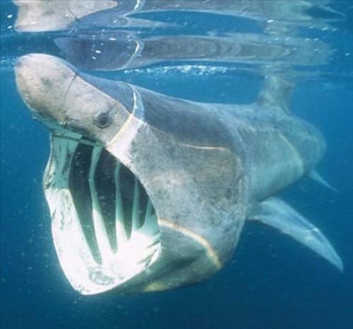 Daha önce bu köpekbalıklarını görmediniz - Page 2