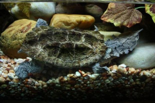 Daha önce hiç görmediğiniz kaplumbağa türleri - Page 1