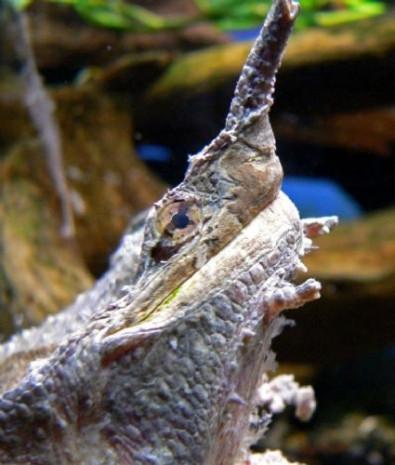 Daha önce hiç görmediğiniz kaplumbağa türleri - Page 2