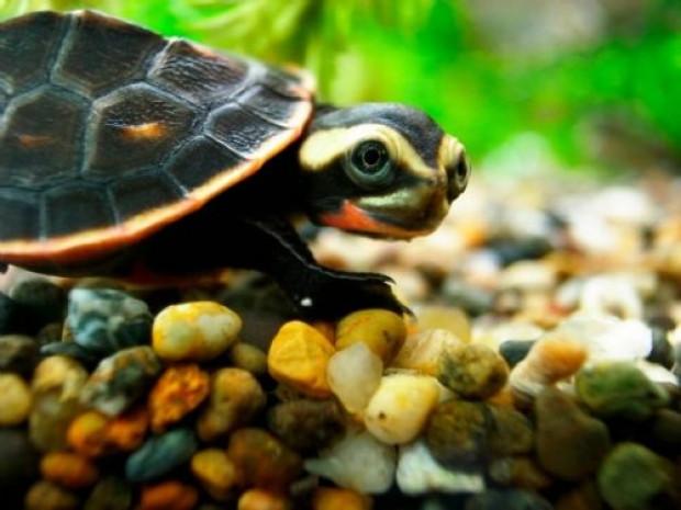 Daha önce hiç görmediğiniz kaplumbağa türleri - Page 3