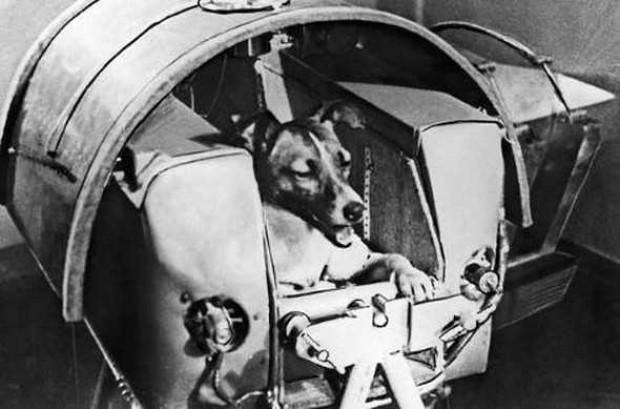 Deney amaçlı uzaya gönderilen hayvanlar ve akibetleri - Page 1