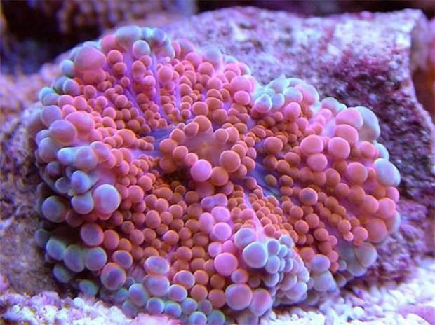Denizin dibinde yaşayan muhteşem canlılar - Page 1
