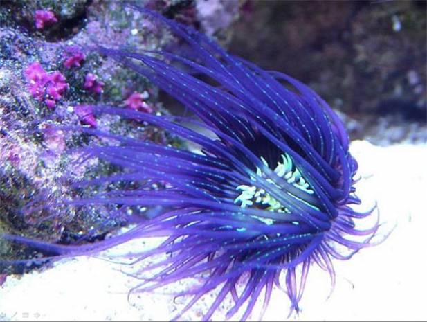 Denizin dibinde yaşayan muhteşem canlılar - Page 3
