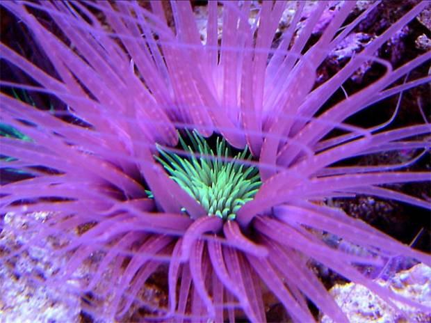 Denizin dibinde yaşayan muhteşem canlılar - Page 4
