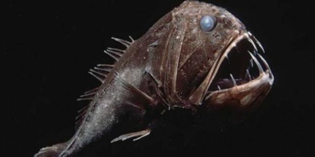 Denizler altında yaşamakta olan 10 dehşet verici canavar - Page 1