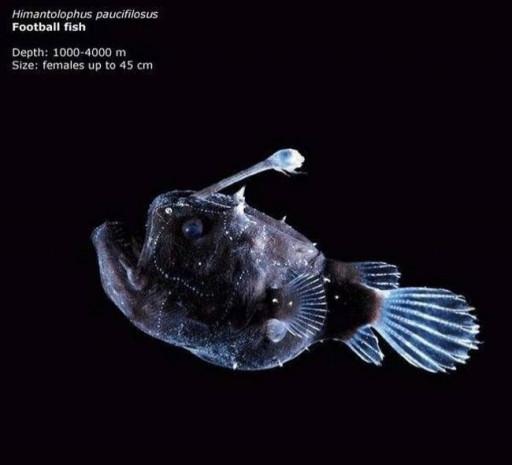 Denizler altında yaşamakta olan 10 dehşet verici canavar - Page 4