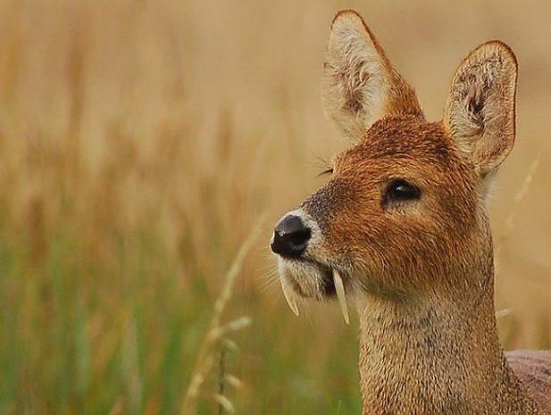 Doğada nadir bulunan en ilginç 50 hayvan - Page 2