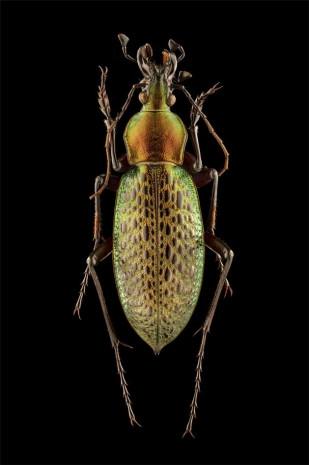 Doğadaki böceklere mikroskop altında bakın! - Page 1