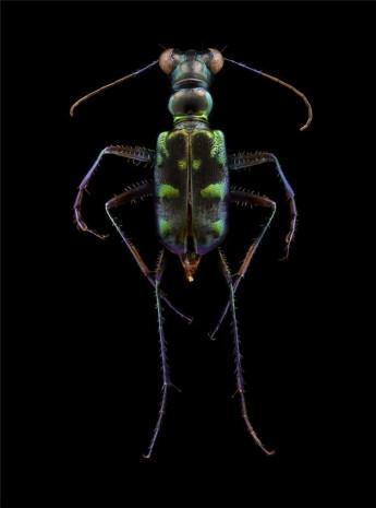 Doğadaki böceklere mikroskop altında bakın! - Page 2