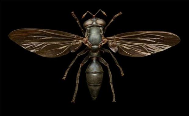 Doğadaki böceklere mikroskop altında bakın! - Page 3