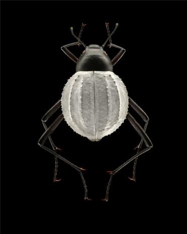 Doğadaki böceklere mikroskop altında bakın! - Page 4