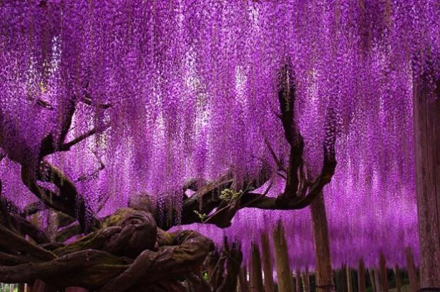 Doğadan mucizevi ağaçlar! - Page 1