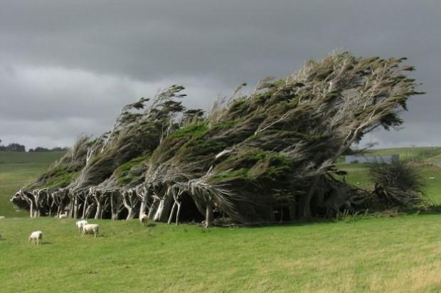 Doğadan mucizevi ağaçlar! - Page 2